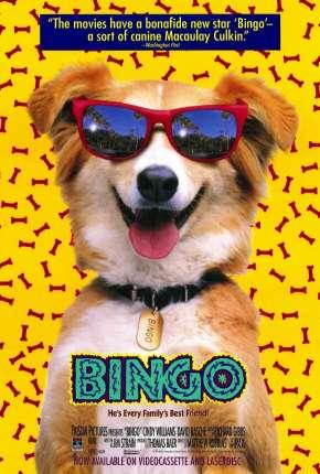 Bingo, Esperto pra Cachorro