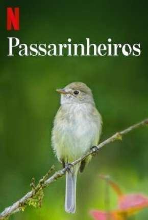 Passarinheiros - Birders