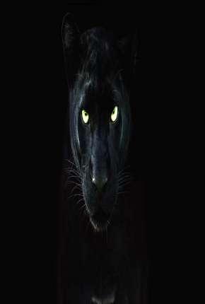 Filme Pantera Negra - O Reino Selvagem Torrent